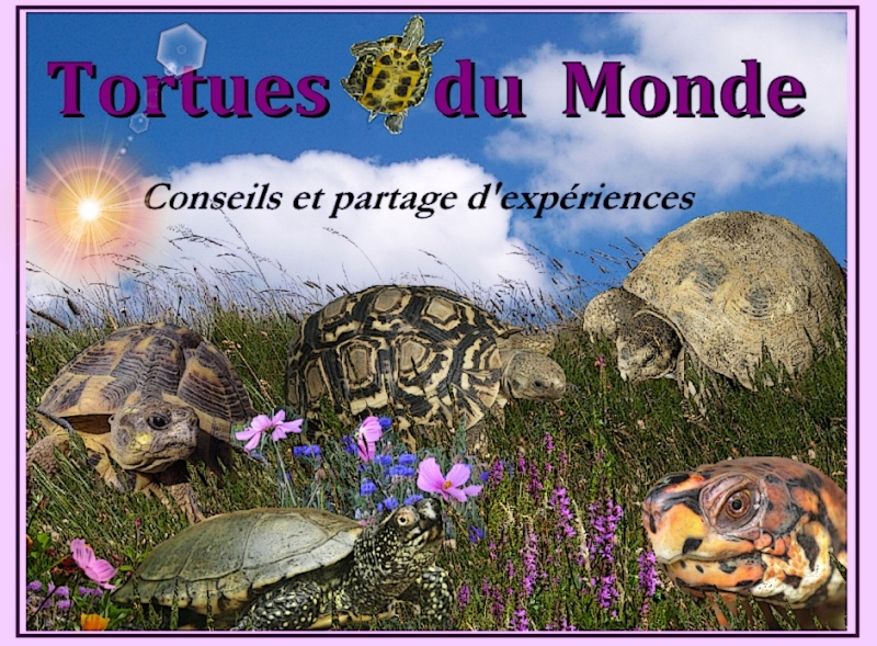 Tortues du Monde