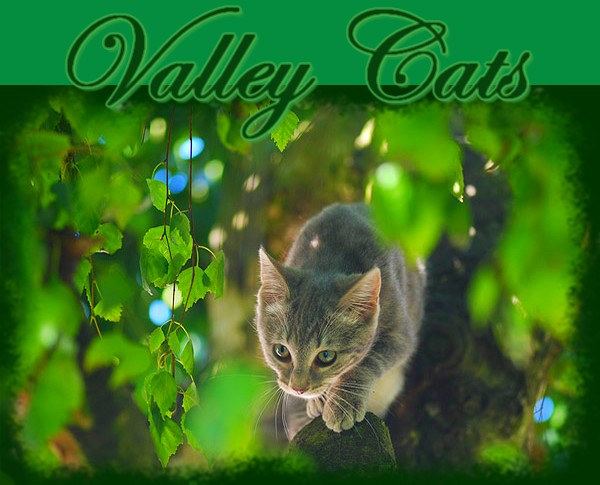 Valley Cats