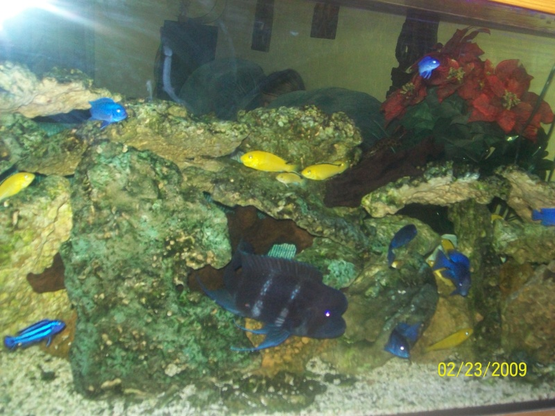 Vends aquarium 600l for Aquarium 600l