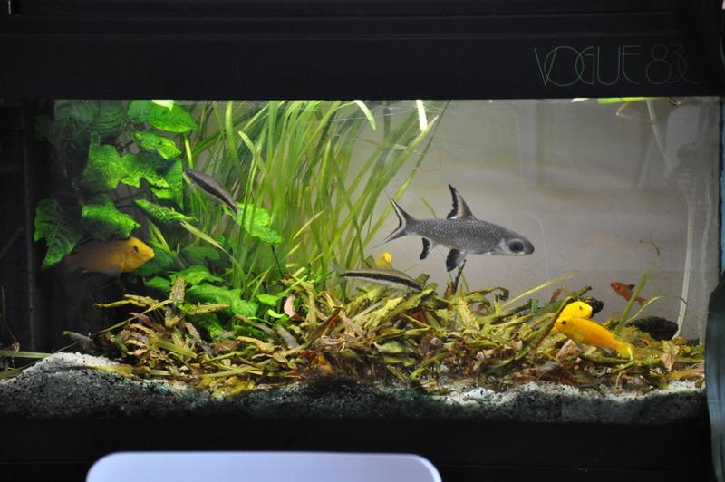 vends aquarium 120 l complet avec poissons plantes. Black Bedroom Furniture Sets. Home Design Ideas