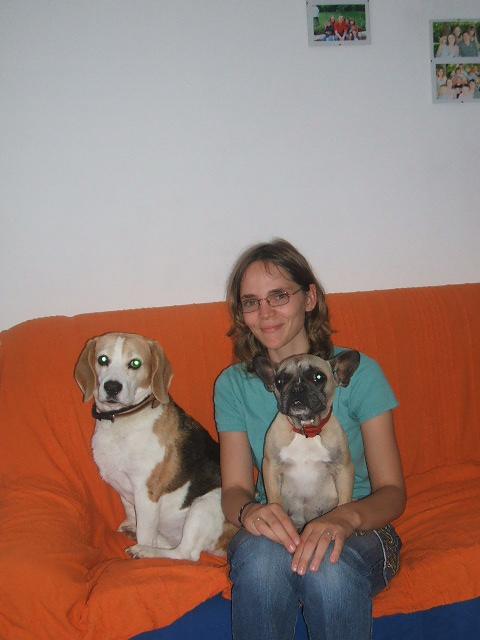 Age adulte beagle - Beagle adulte ...