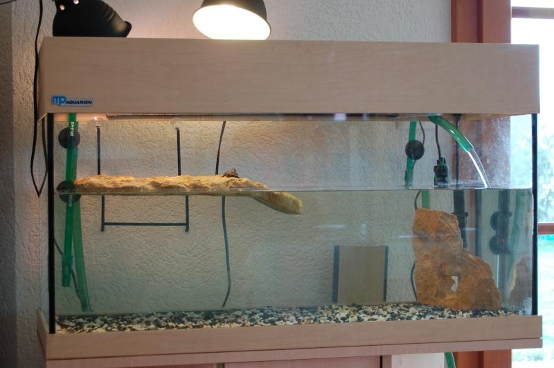 ma tortue reste toujours dans l eau
