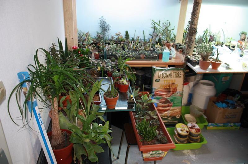 Dans quoi planter des plantes grasses - Quoi planter en hiver ...