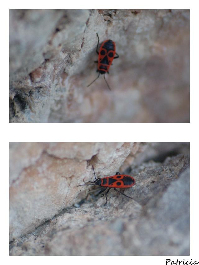 drôle d'insecte. dans vacances 2010 019010