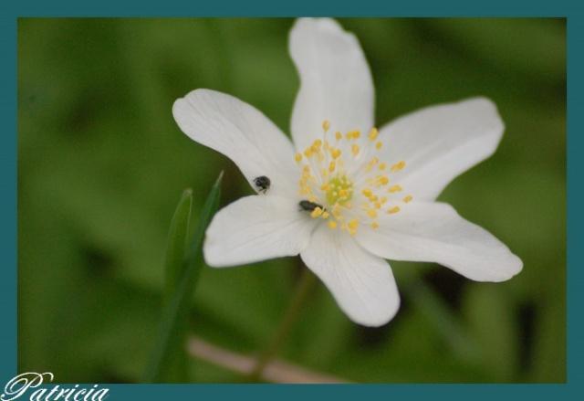 recontre au coeur .. dans fleurs 0310
