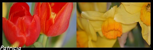 0311 dans fleurs