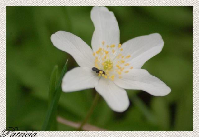 0410 dans fleurs