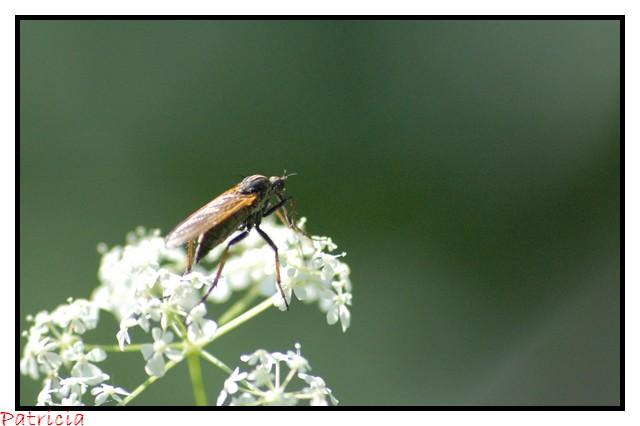 moustique ou Taôn ? dans nature 05710