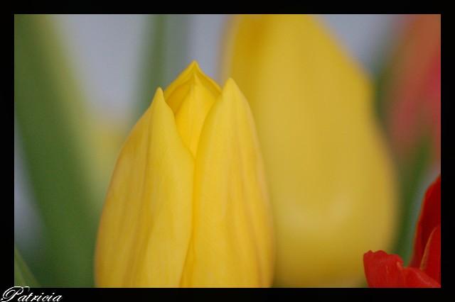 0612 dans fleurs