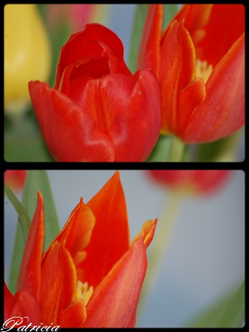 1010 dans fleurs