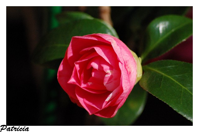 pour vous dans fleurs 35910