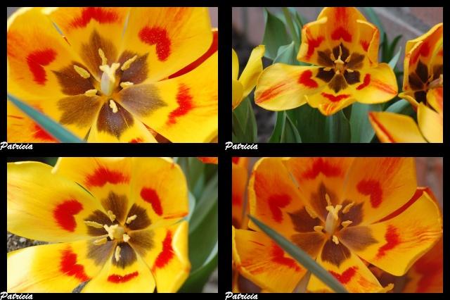 tulipes dans fleurs 37110