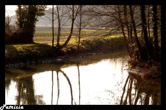 cours d'eau dans nature 40810