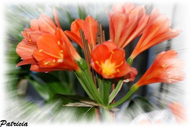 41710 dans fleurs