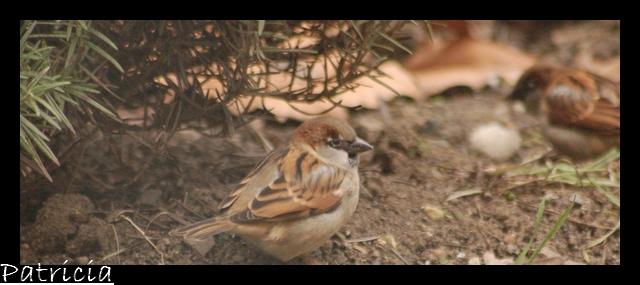oiseau13 dans animaux