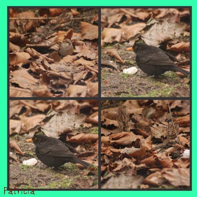 oiseau14