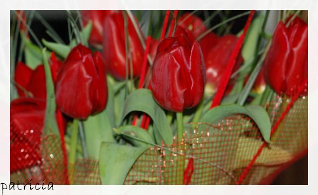 tulipe11 dans fleurs