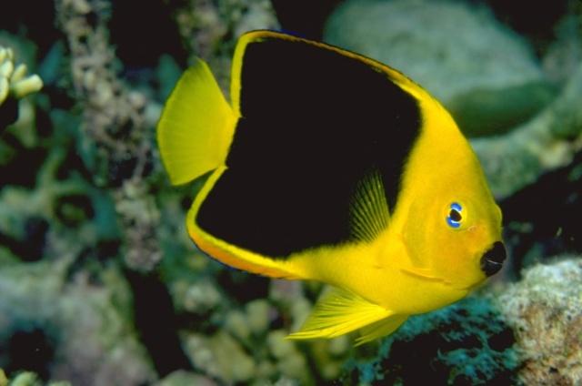 الأسماك الجميلة وقل سبحان الله 00001910.jpg