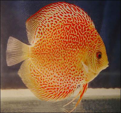 الأسماك الجميلة وقل سبحان الله 09100310.jpg