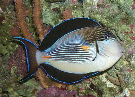 الأسماك الجميلة وقل سبحان الله 13_12110.jpg