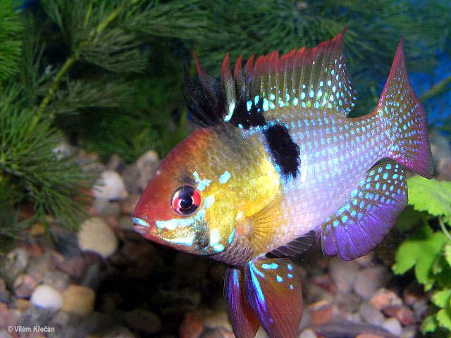 الأسماك الجميلة وقل سبحان الله 2059kq10.jpg