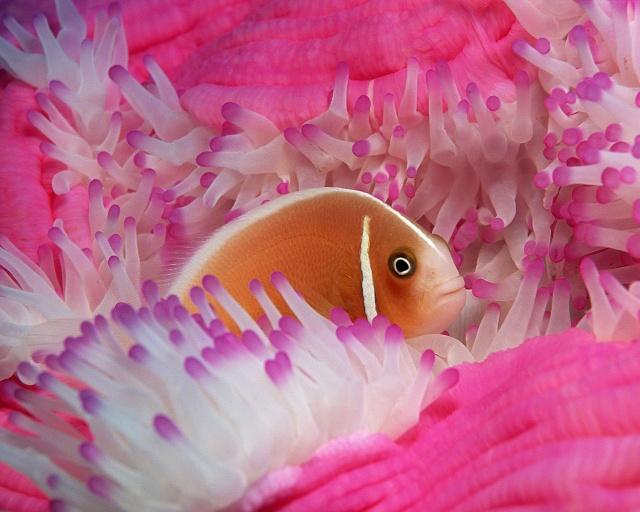 الأسماك الجميلة وقل سبحان الله 43216210.jpg