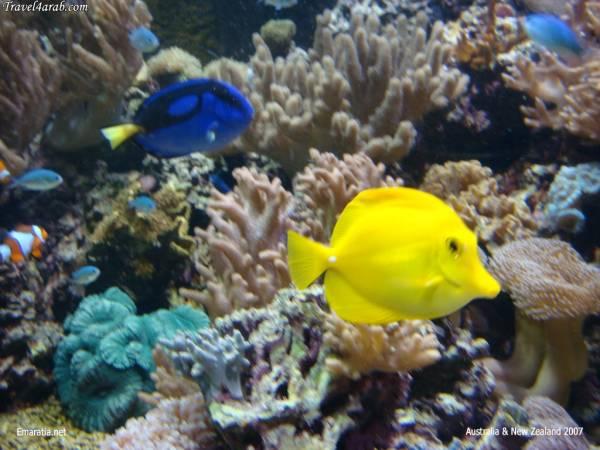 الأسماك الجميلة وقل سبحان الله b2047310.jpg