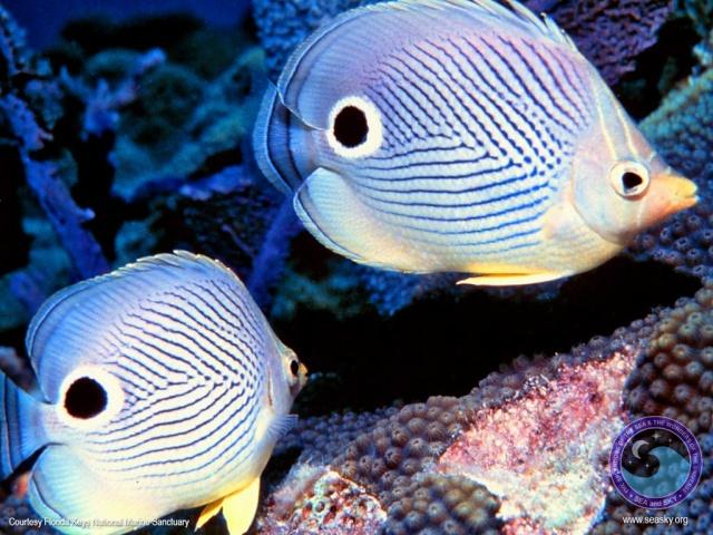 الأسماك الجميلة وقل سبحان الله butter10.jpg