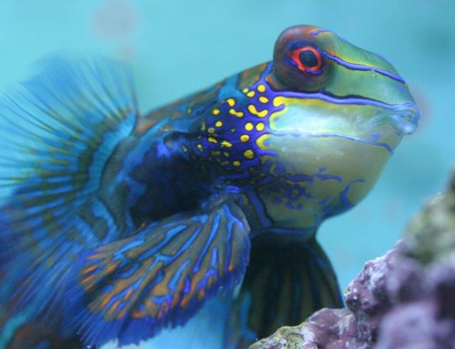 الأسماك الجميلة وقل سبحان الله craima10.jpg