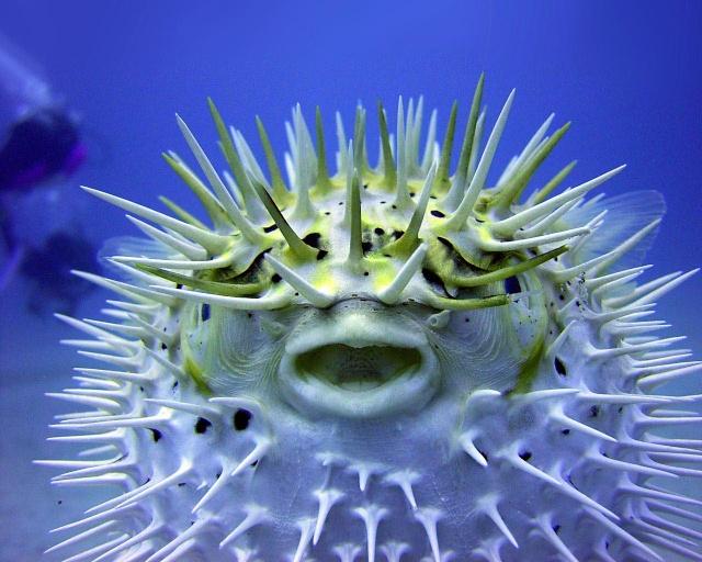 الأسماك الجميلة وقل سبحان الله the_pu10.jpg
