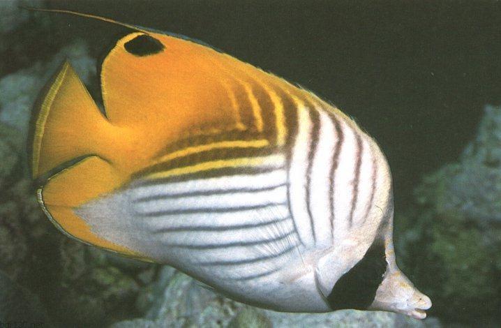 الأسماك الجميلة وقل سبحان الله thread10.jpg