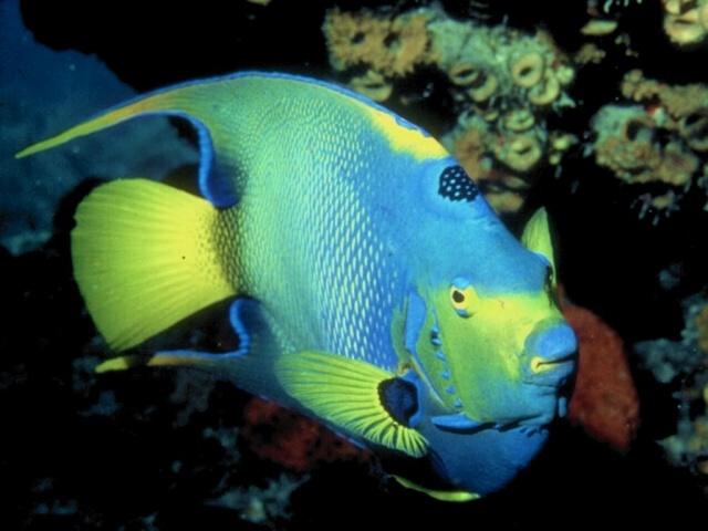 الأسماك الجميلة وقل سبحان الله ws_col10.jpg