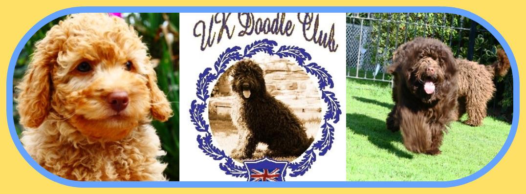 The UK Doodle Club Labradoodle Forum