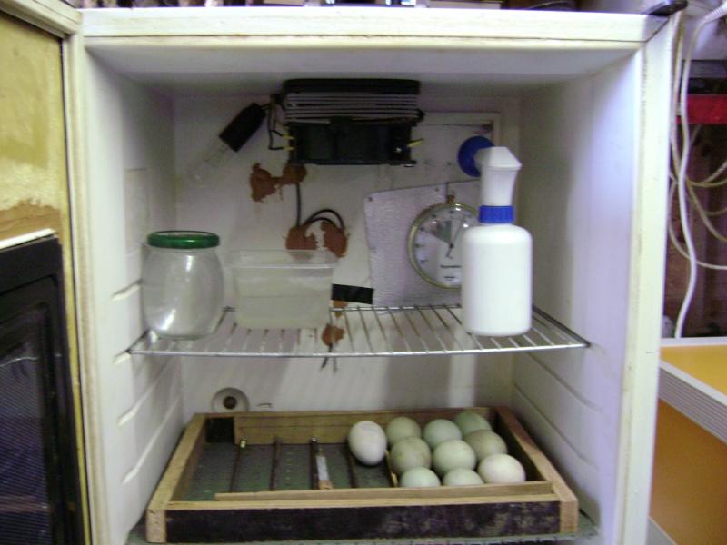 Couveuses page 2 - La maison des frigos ...