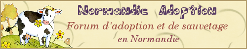 "Forum ""Normandie Adoption"""