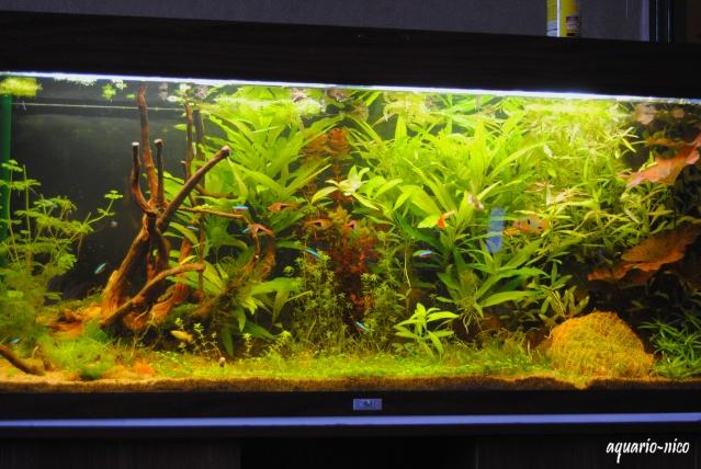 Mon 240 litre bien plant for Plante 6 mois