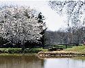 http://i66.servimg.com/u/f66/13/06/04/92/pond10.jpg
