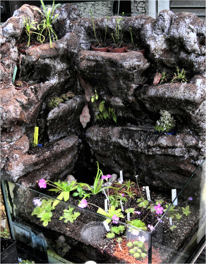 r alisation d 39 un terrarium paysag pour plantes carnivores. Black Bedroom Furniture Sets. Home Design Ideas