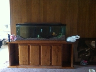 Cl 100 gallon with stand north rischland hills tx for 150 gallon fish tank for sale craigslist