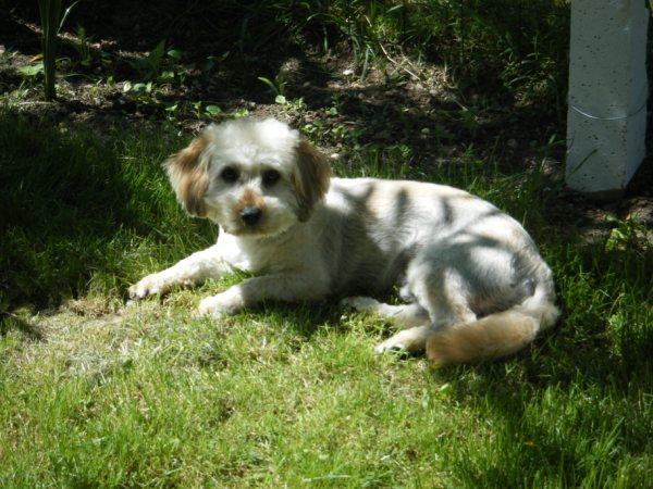 Des nouvelles des chiens du Refuge d'Aunay sur Odon