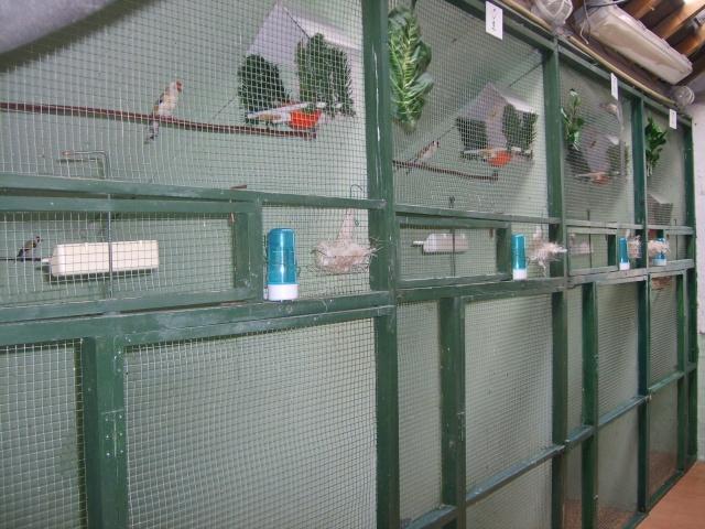 cage oiseaux occasion trouvez le meilleur prix sur voir. Black Bedroom Furniture Sets. Home Design Ideas
