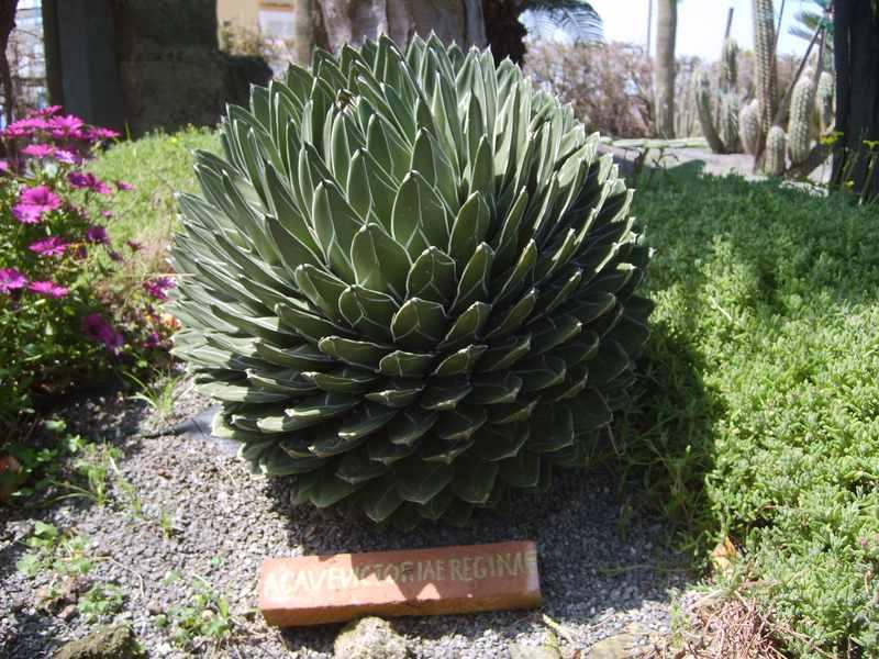 Non solo bonsai ma amo tutte le piante del mondo for Tutte le piante grasse