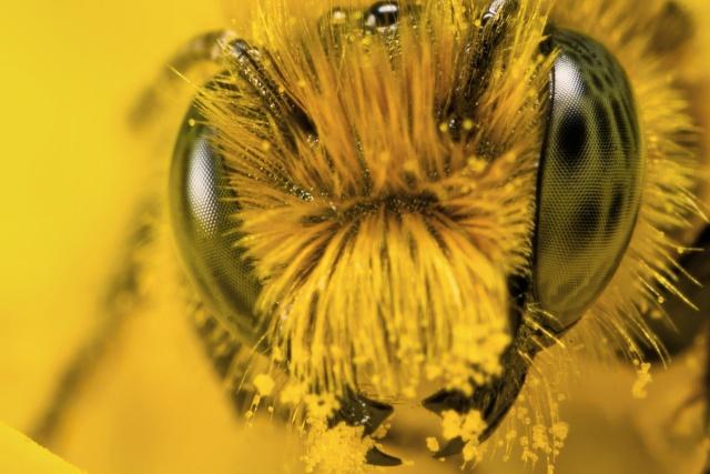 Пчеловодство Краматорска