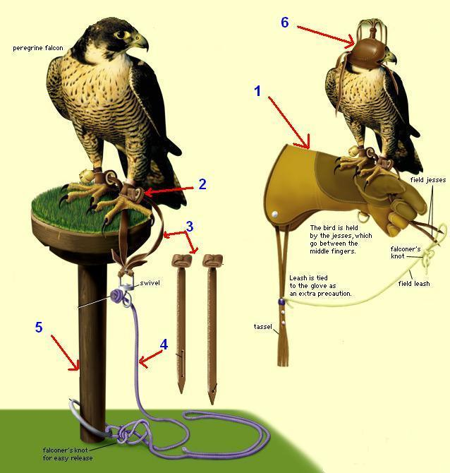 istilah dalam elang, istilah mata elang, istilah elang, istilah dalam burung elang, istilah burung elang, istilah istilah elang, melatih elang terbang, melatih elang jawa, melatih elang liar, melatih elang bido, melatih elang berburu, melatih elang untuk berburu, melatih elang bondol, melatih elang tikus, melatih elang brontok, melatih elang cg, melatih elang bido, melatih elang, melatih elang hitam, melatih elang dewasa, melatih elang alap alap, melatih anakan elang,