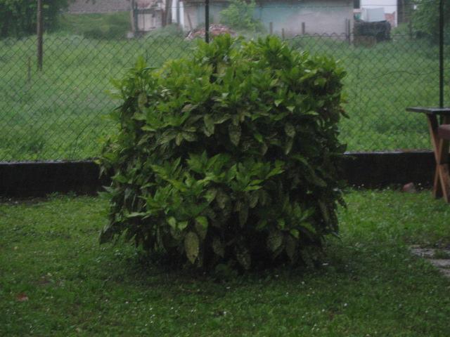 Le piante velenose o pericolose per i cani pagina 2 for Piante velenose per i cani