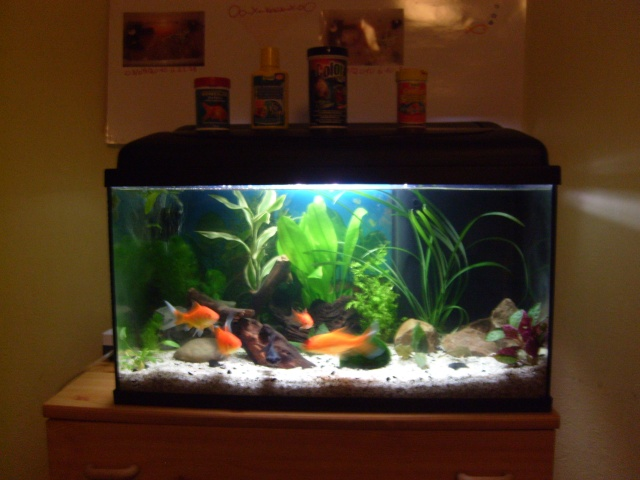 60 l plant vos avis for Deco aquarium poisson rouge