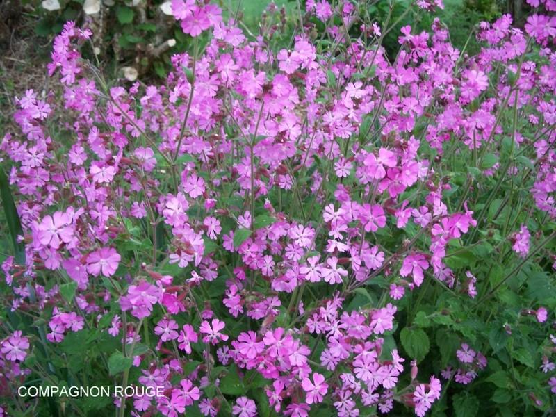 les fleurs de l'arree 1ère partie